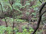 0 Northland Trail - Photo 10