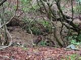 0 Northland Trail - Photo 9