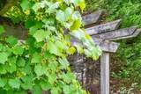 4191 Lovingwood Trail - Photo 50