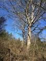 0 Cedar Oak Way - Photo 3