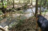 17 Etowah Trail - Photo 4