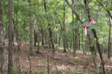 1 Bumpy Trail - Photo 6