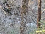 4.64 Acres Bear Den Road - Photo 19