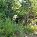 2245 Ivy Mountain Road - Photo 6