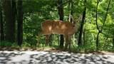 1012 Wild Turkey Bluff - Photo 20
