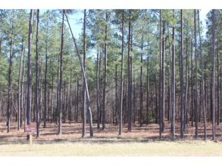 Lot111 The Thirteen Hundred, Blairsville, GA 30512 (MLS #5804987) :: North Atlanta Home Team