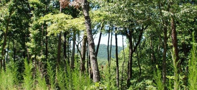9320 Blackwell Creek Way, Big Canoe, GA 30143 (MLS #6539007) :: RE/MAX Paramount Properties