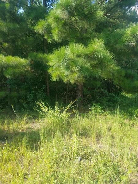 211 Village Lane, Woodstock, GA 30188 (MLS #5961327) :: Carr Real Estate Experts