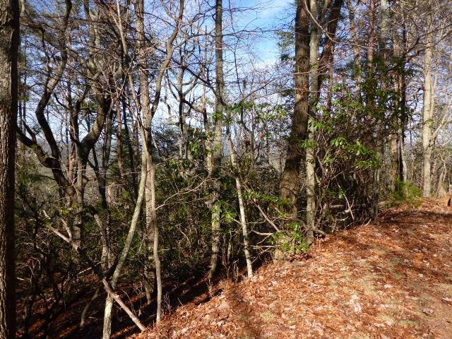252 Wild Turkey Bluff - Photo 1