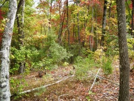 Lot 24 Forrest Hills Road, Dahlonega, GA 30533 (MLS #6013539) :: The Russell Group