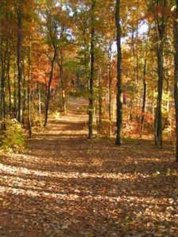 5314 Monarch Drive, Gainesville, GA 30506 (MLS #6023847) :: RE/MAX Paramount Properties