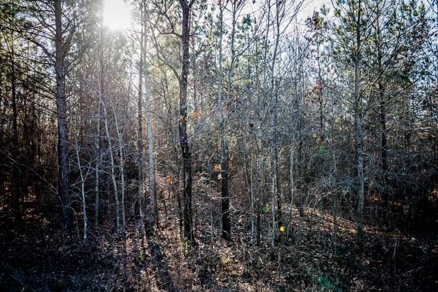 158 Galax Trail, Ellijay, GA 30705 (MLS #6024907) :: RE/MAX Paramount Properties