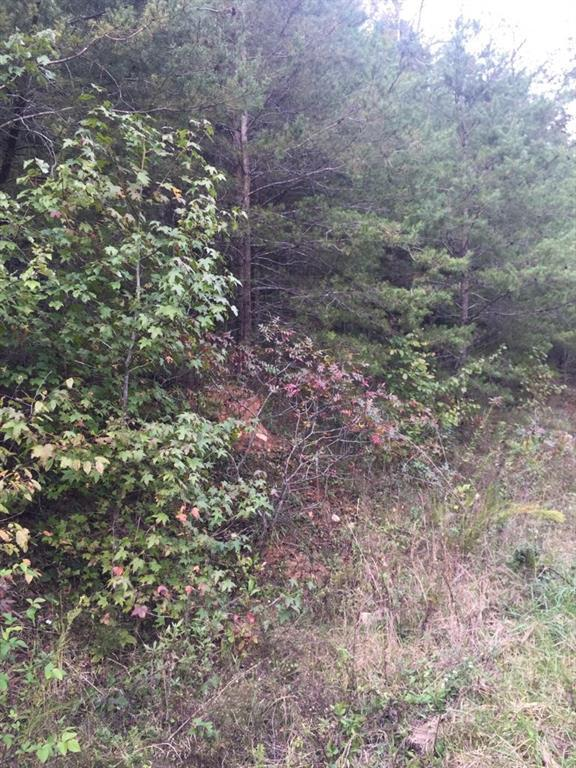 00 Deer Trail, Dahlonega, GA 30533 (MLS #6089088) :: Ashton Taylor Realty