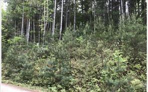 Lot 1 Lazy Springs Road, Blairsville, GA 30512 (MLS #6095894) :: Iconic Living Real Estate Professionals