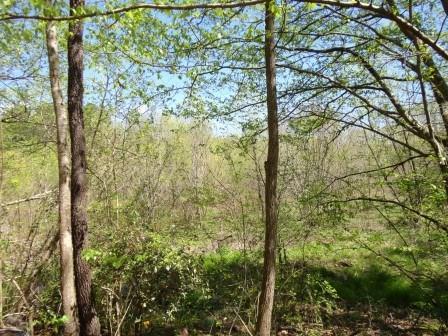 15555 Hopewell Road, Alpharetta, GA 30004 (MLS #6101243) :: Hollingsworth & Company Real Estate