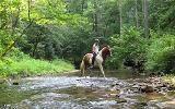 Lt 30 Tanager Trail, Ellijay, GA 30536 (MLS #6503867) :: The Zac Team @ RE/MAX Metro Atlanta