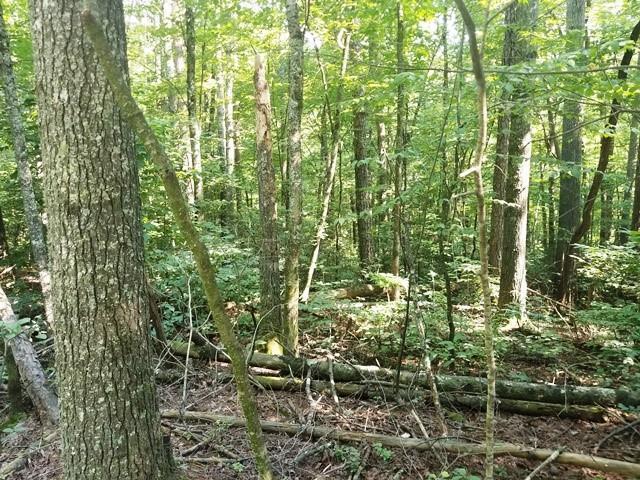 LT10 Bear Paw Trail, Blue Ridge, GA 30513 (MLS #6570739) :: Team RRP | Keller Knapp, Inc.