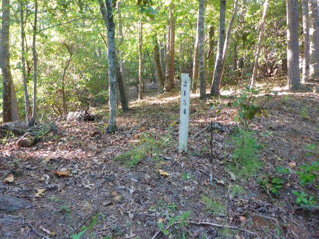 2154 Royal Fern Trail - Photo 1