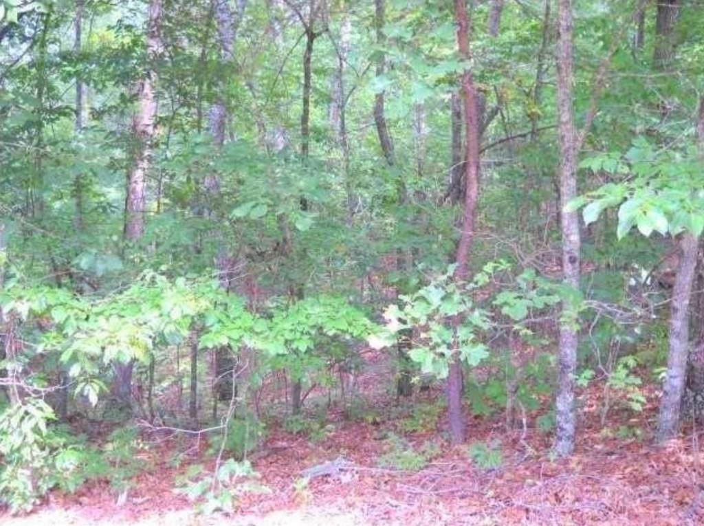 1699 Shade Tree Drive - Photo 1
