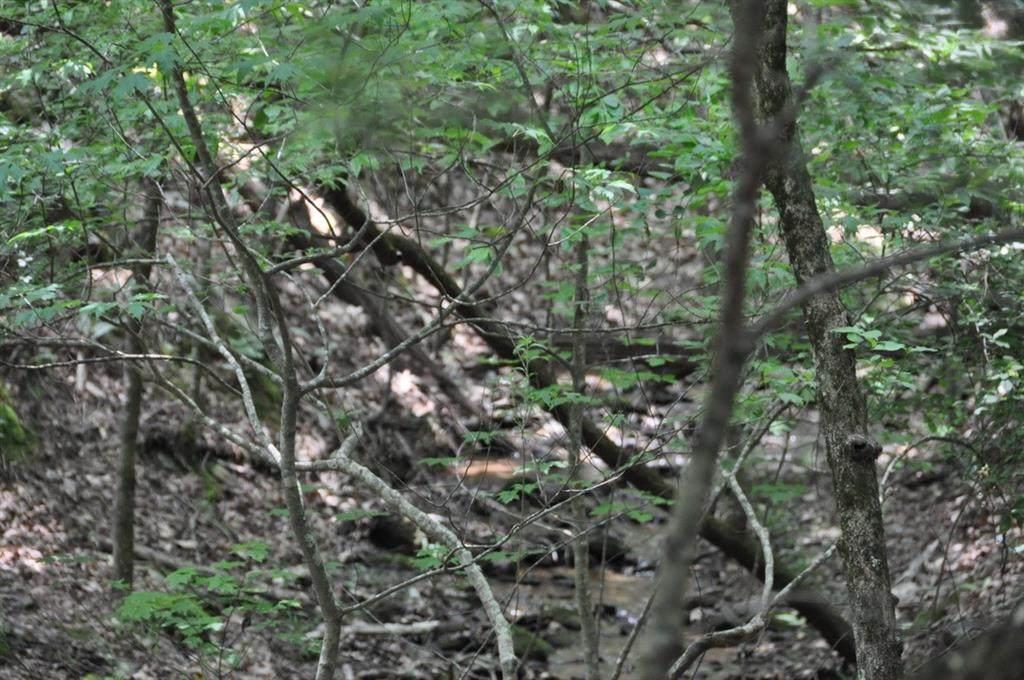 2144 Crested Fern Lane - Photo 1
