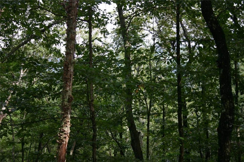 402 South View Trail - Photo 1