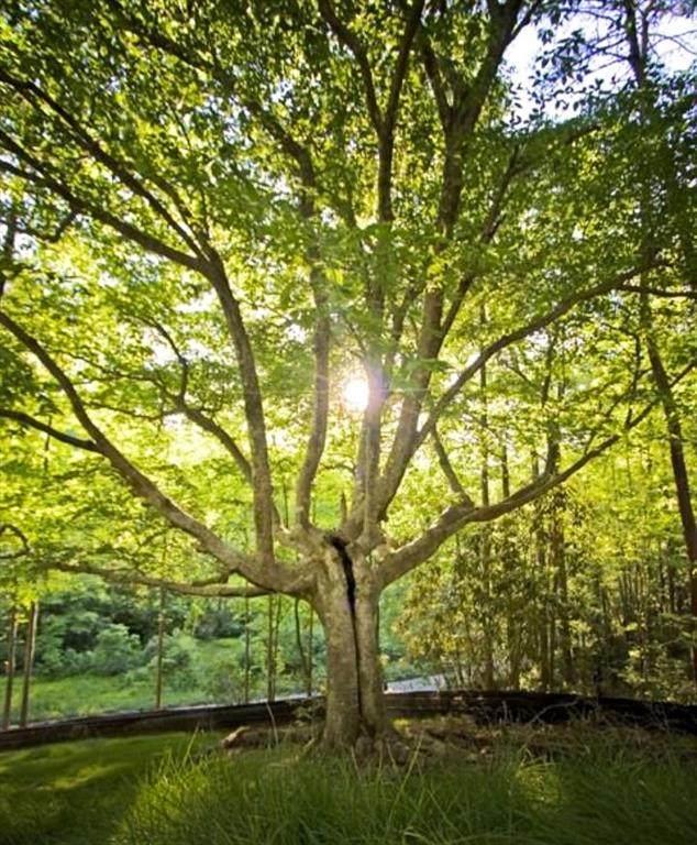 0 Whispering Tree, Lot 8 - Photo 1