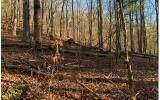 1684 Shade Tree Drive - Photo 6