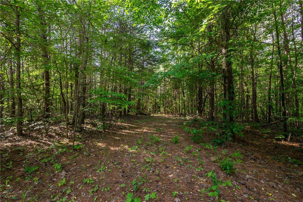 LT 10 Long Branch Trail - Photo 1
