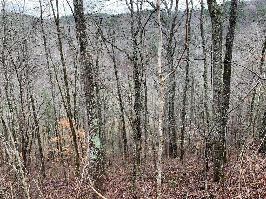 1752A Elk Trail - Photo 1