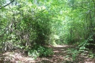 Lot 46 Nimblewill Creek Road - Photo 1