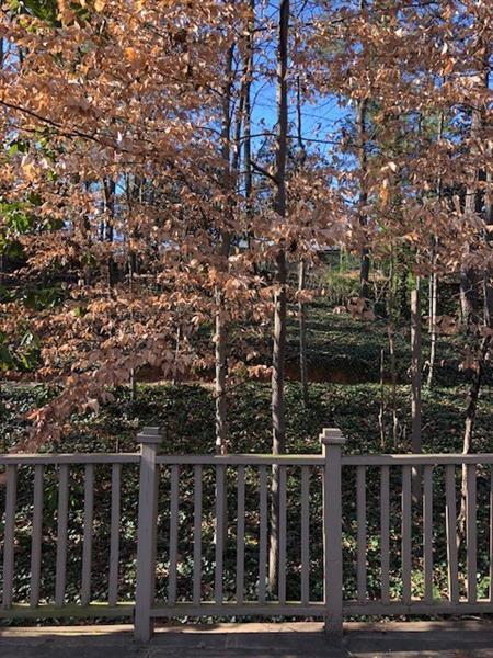 362 Old Ivy Road NE, Atlanta, GA 30342 (MLS #5944212) :: North Atlanta Home Team