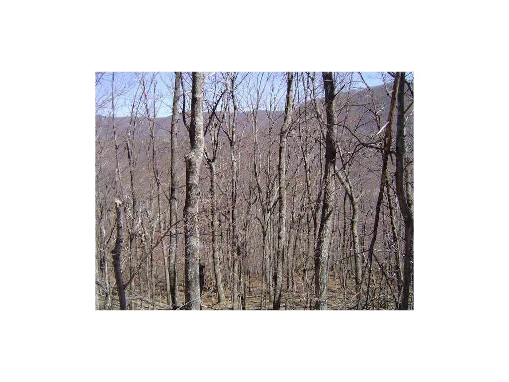 2936 Locust Trail - Photo 1