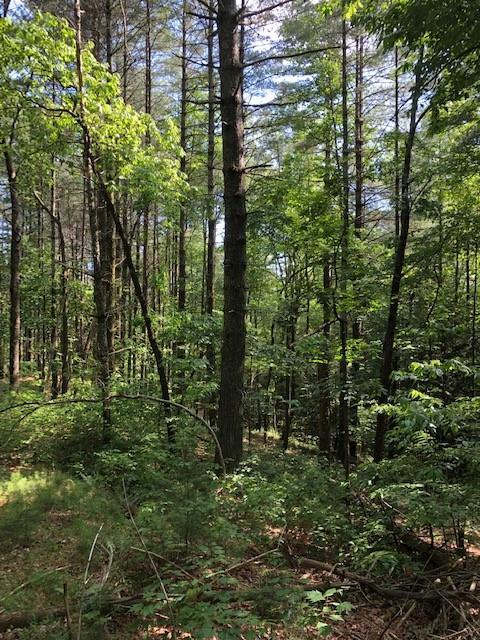Lot 8 Pickett Mill Court, Ellijay, GA 30540 (MLS #6098721) :: The Hinsons - Mike Hinson & Harriet Hinson