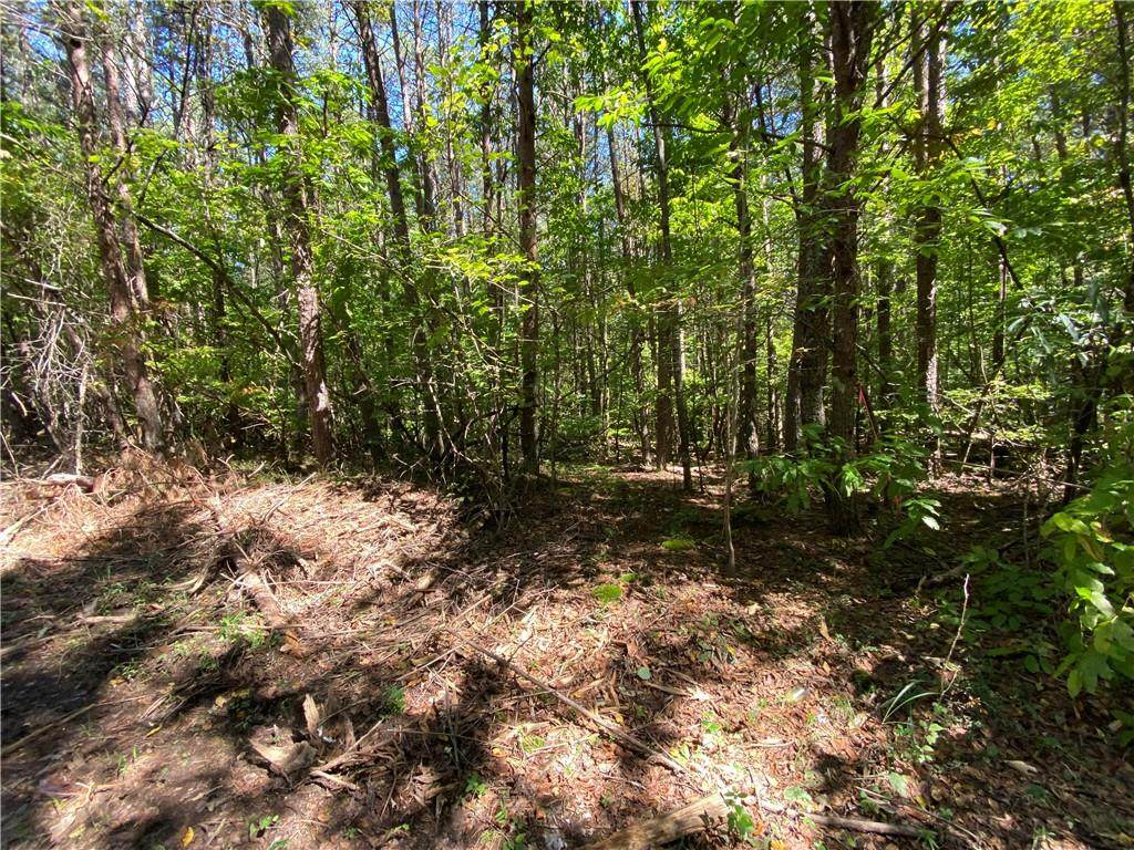 Lot 3 Mineral Springs Road - Photo 1