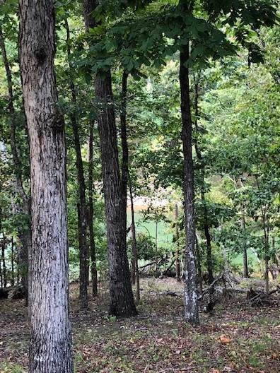 3884 Silver Brook Lane, Gainesville, GA 30506 (MLS #6575700) :: Team RRP | Keller Knapp, Inc.
