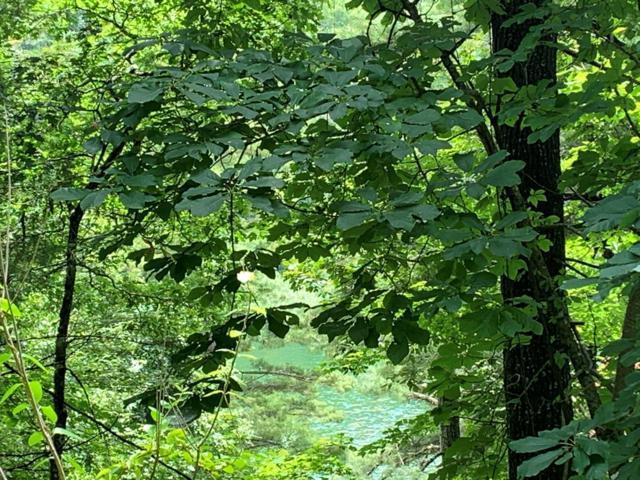 Lot 37 Wild Blackberry Ridge, Cullowhee, NC 28723 (#26021030) :: High Vistas Realty