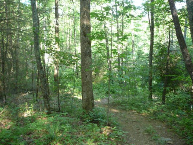 00 Sawmill Creek Road - Photo 1