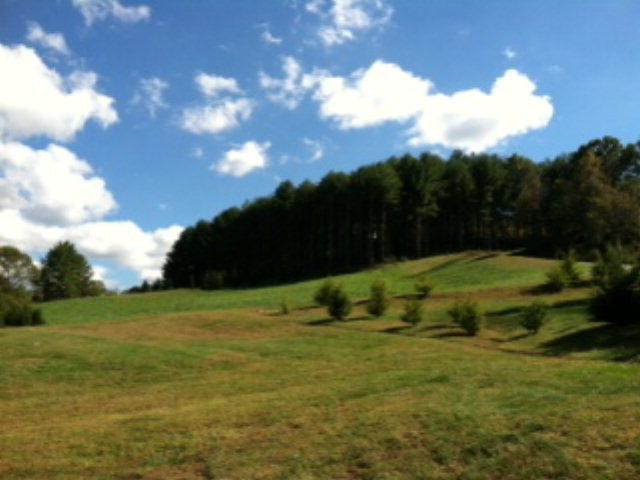 17 N. Sundrops Trail - Photo 1