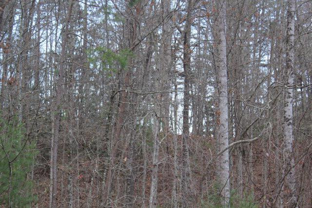 6033 Grassy Branch - Photo 1