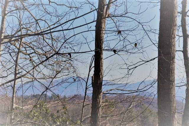 Lot 67 Trimont Mountain Rd, Franklin, NC 28734 (MLS #26019920) :: Old Town Brokers