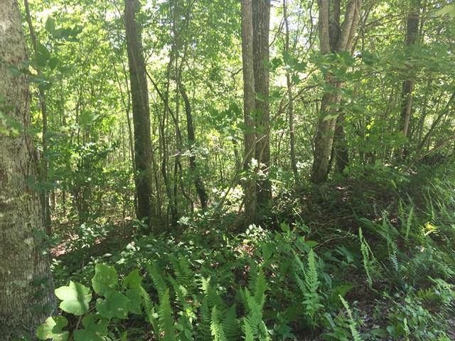 Lot 69B Grizzly Ridge, Bryson City, NC 28713 (MLS #26020034) :: Old Town Brokers