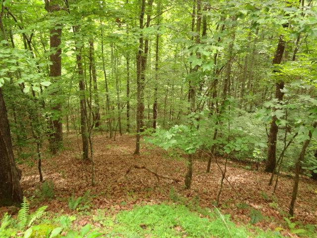 00 Deerwood Drive, Franklin, NC 28734 (#26020844) :: High Vistas Realty