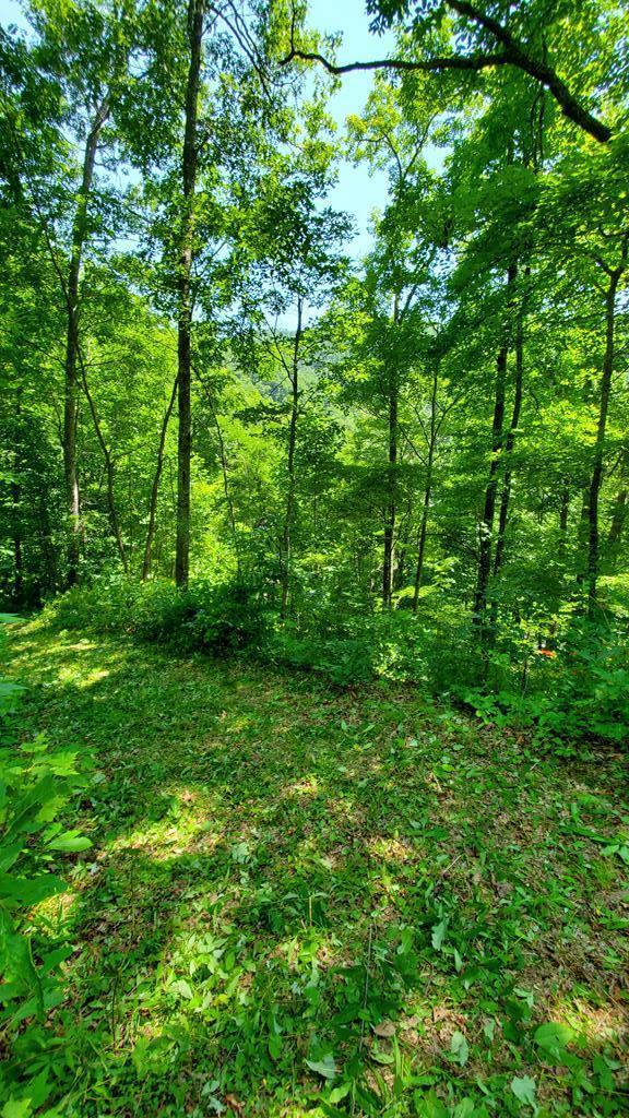Lot 34 Black Walnut, Bryson City, NC 28713 (#26016312) :: High Vistas Realty