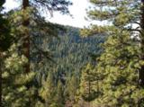 7487 Yosemite Park Way - Photo 7