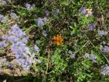 0 Timber Ridge - Photo 3