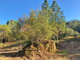 4-Acres Foothill Lane - Photo 12