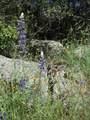 4822 Indian Peak Road - Photo 33