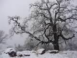 37101 Sundance Drive - Photo 20
