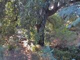 38422 Squaw Valley Road - Photo 34