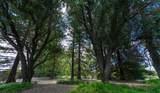 10173 Rolling Hills Drive - Photo 44